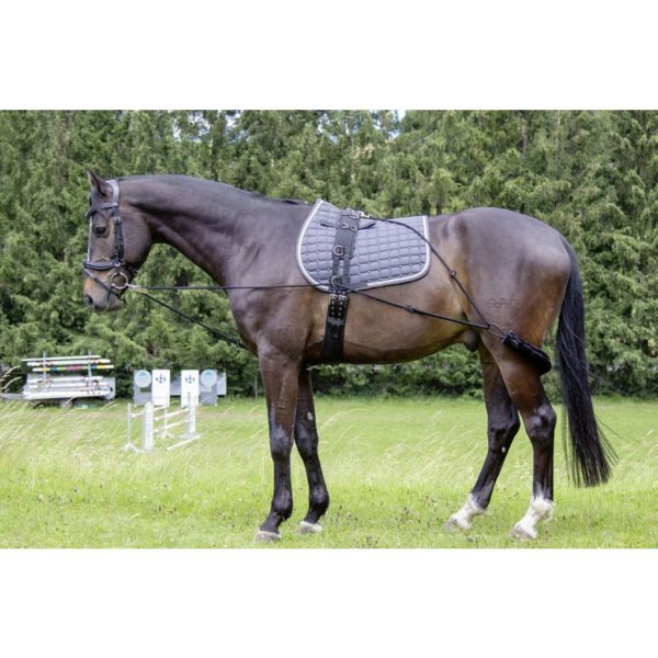 HKM Training Aid for Lunging