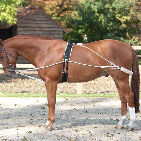 Lami-Cell Training Aid for Lunging
