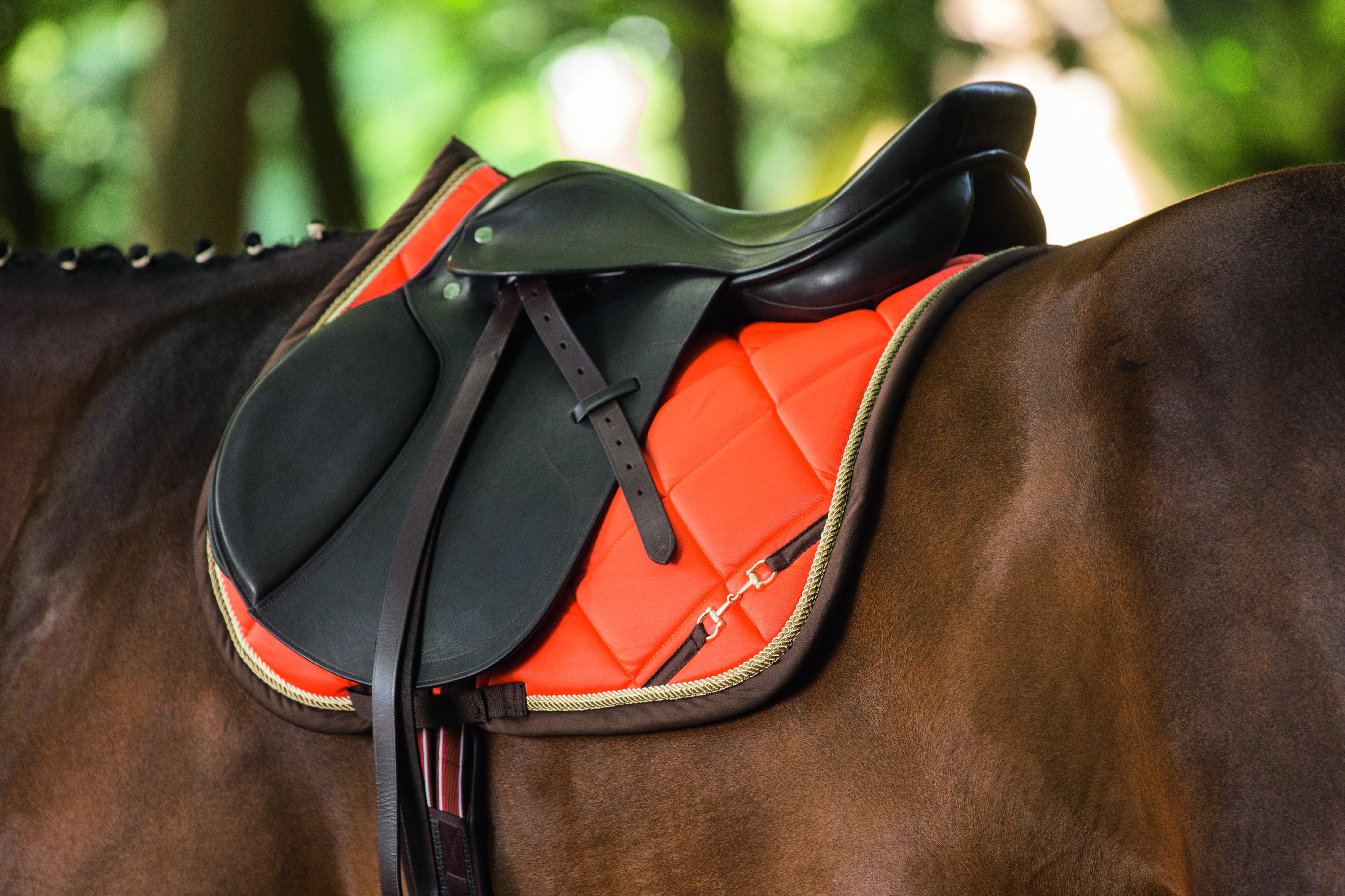 Lauria Garrelli Saddle Pad Golden Gate Bit Hkm The Connected Rider