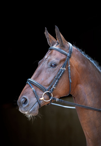 Shires Rossano Milan Bridle